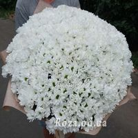 101 white chrysanthemum - Photo 1