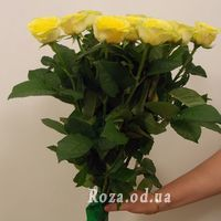 11 yellow roses - Photo 1
