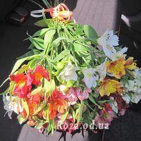 15 alstroemeria - Photo 3