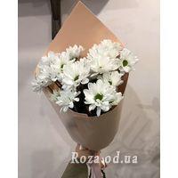 3 chamomile chrysanthemums - Photo 1