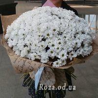 51 ромашковая хризантема - Фото 2