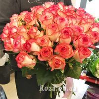 51 roses Jumilia - Photo 2