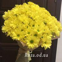 9 chamomile chrysanthemums - Photo 1