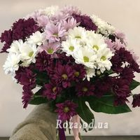 Multicolored chrysanthemums - Photo 1
