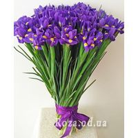 101 iris - Photo 1