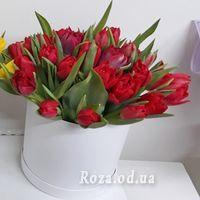 35 червоних тюльпанів в коробці - Фото 1