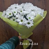 Bouquet of 7 chamomiles - Photo 3