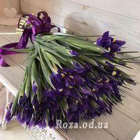 101 iris - Photo 2