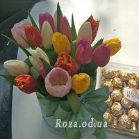 21 multi-colored tulip - Photo 1