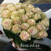 31 rose Pink Mondial - Photo 1