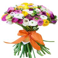 """A huge bunch of Ranunculus"" in the online flower shop roza.od.ua"