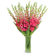 19 pink gladioli - flowers and bouquets on roza.od.ua