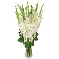 """Bouquet of 15 White Gladiolus"" in the online flower shop roza.od.ua"
