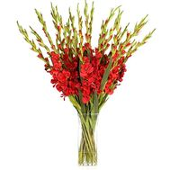 Bouquet of 21 red gladiolus - flowers and bouquets on roza.od.ua