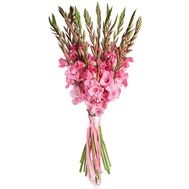 Bouquet of pink gladiolus - flowers and bouquets on roza.od.ua