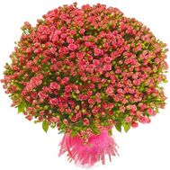 151 кущова троянда - цветы и букеты на roza.od.ua