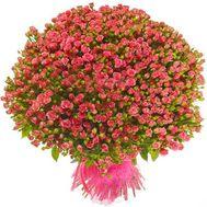 151 кустовая роза - цветы и букеты на roza.od.ua