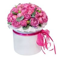 39 pink peonies in a box - flowers and bouquets on roza.od.ua