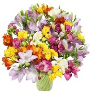 Bouquet of 51 freesias - flowers and bouquets on roza.od.ua