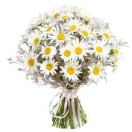 Bouquet of field chamomiles - flowers and bouquets on roza.od.ua