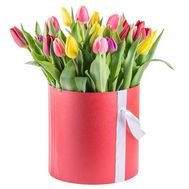 21 multi-colored tulip - flowers and bouquets on roza.od.ua