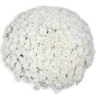 101 white chrysanthemum - flowers and bouquets on roza.od.ua
