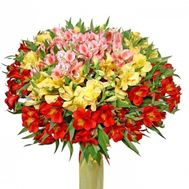 101 multi-colored alstroemerias - flowers and bouquets on roza.od.ua