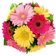 """13 varicoloured gerberas"" in the online flower shop roza.od.ua"