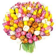 151 тюльпан - цветы и букеты на roza.od.ua