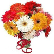 17 gerberas - flowers and bouquets on roza.od.ua