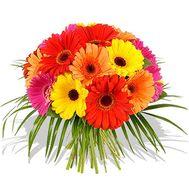 21 гербера - цветы и букеты на roza.od.ua
