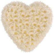 25 chrysanthemums heart - flowers and bouquets on roza.od.ua
