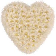25 хризантем сердце - цветы и букеты на roza.od.ua