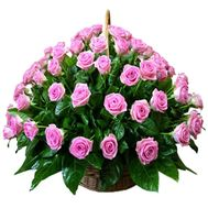 75 pink roses in the basket - flowers and bouquets on roza.od.ua