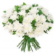 15 chrysanthemums - flowers and bouquets on roza.od.ua