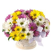 """9 chrysanthemums"" in the online flower shop roza.od.ua"