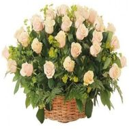 51 cream-colored roses - flowers and bouquets on roza.od.ua
