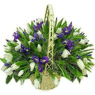 """Basket of 71 tulips and irises"" in the online flower shop roza.od.ua"