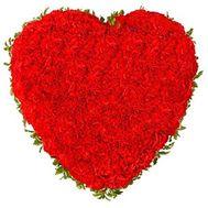 Сердце из 101 красной гвоздики - цветы и букеты на roza.od.ua
