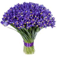 101 iris - flowers and bouquets on roza.od.ua