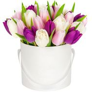Bouquet of 25 tulips in a box - flowers and bouquets on roza.od.ua