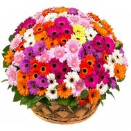 """101 gerberas"" in the online flower shop roza.od.ua"