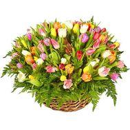 201 тюльпан - цветы и букеты на roza.od.ua