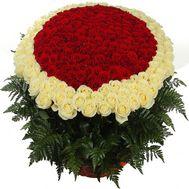 501 роза в Одессе - цветы и букеты на roza.od.ua