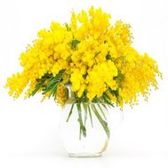 """9 branches of mimosa"" in the online flower shop roza.od.ua"