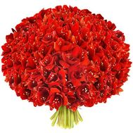 Large bouquet of amaryllis - flowers and bouquets on roza.od.ua