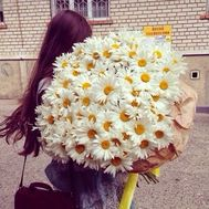 Bouquet of 101 chamomiles - flowers and bouquets on roza.od.ua