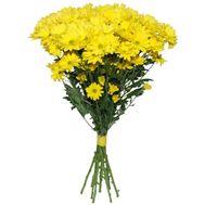 Букет 9 ромашек - цветы и букеты на roza.od.ua