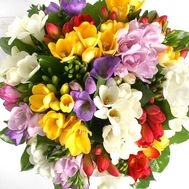 Bouquet of 35 freesias - flowers and bouquets on roza.od.ua