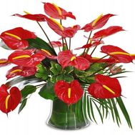 Bouquet of 21 anthuriums - flowers and bouquets on roza.od.ua